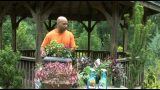 Organic Container Vegetable Gardening for Beginners from William Moss