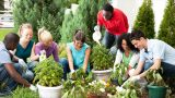Jobs For The Summer – Gardening Jobs TO Be Done