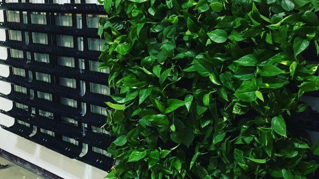 Vertical Living Wall – VerTexx Installation Guide