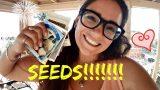 Seeds for fall/winter garden in Arizona : B2E Gardening : Desert Gardening