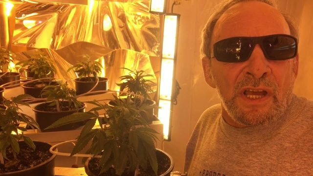 Affinor Growers Vertical Cannabis Grow Trial with the King of Pot  Sam Mellace