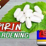 ASPIRIN IN GARDENING – Top 6 Benefits of Aspirin Tablet in Garden – in English