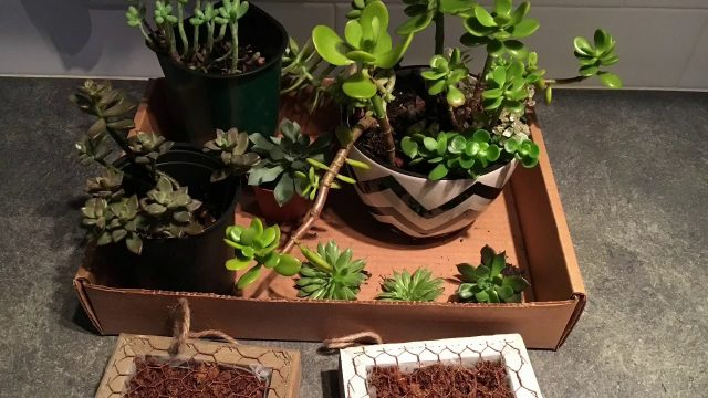 Succulent Box Wall Planter