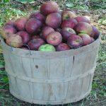 Planting Heirloom Apple Trees on the Small Farm – The Farm Hand's Companion Show, ep 7