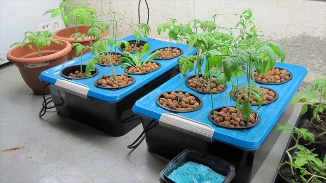 Hydroponic Kits Designed For Water Culture System – Nutrient Solution