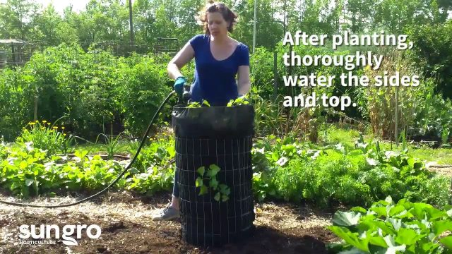 Raised Sweet Potato Garden Tower DIY