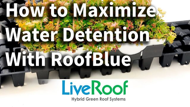 Blue Roofs combined with Green Roofs as Tools for Low Impact Stormwater Management