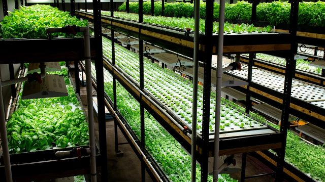 Aquaponics – Providing expertise and equipment to address your needs!