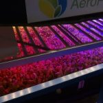 World's Largest Vertical Farm in New Jersey