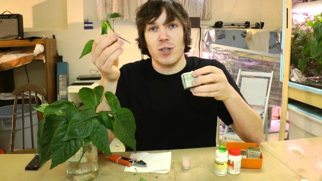 How To Hydroponics – S02E10 How To Clone Plants