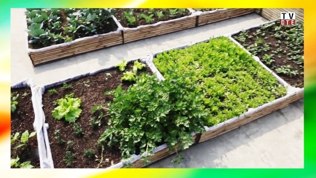 How To Setup Rooftop Kitchen Garden (Step By Step Instructions)