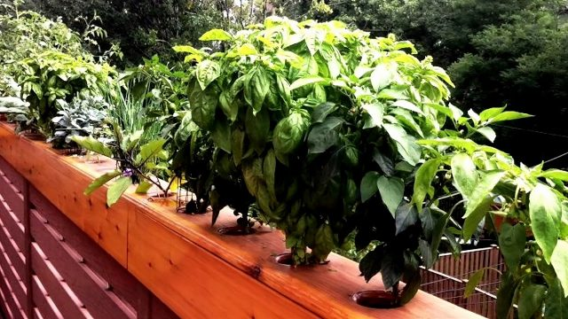 Balcony Vegetable Garden Ideas