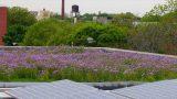 Popular Green roof & Roof videos