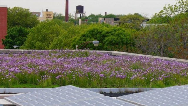 Popular Green roof & Roof videos