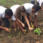 School Garden Project – Danielle