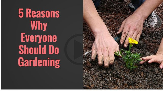 Benefits of gardening: Are you missing these?