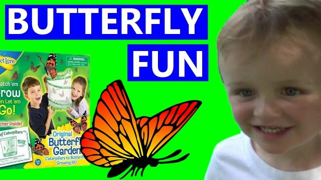 Insect Lore Butterfly Garden Kit Grow & Release Fun For Kids See Metamorphosis Educational  Project