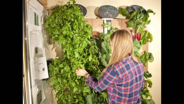 Best vertical vegetable gardening systems
