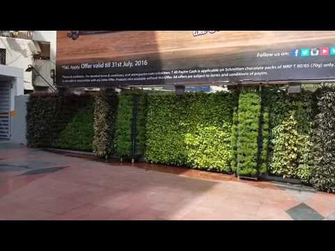 Natural Greenwall by Green Wall Nursery, Nashik