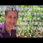 Pruning & Training Tomato Plants To Grow In A Vertical Garden For Maximum Health And Yields