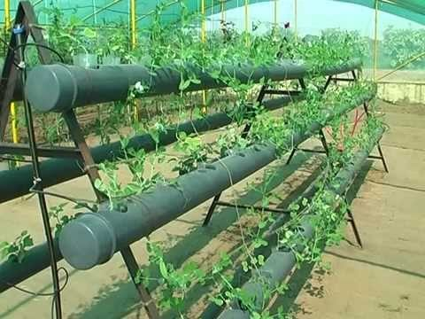Hydroponics, Agriculture University, Jodhpur Agriculture University, Jodhpur By Dr. LN Harsh