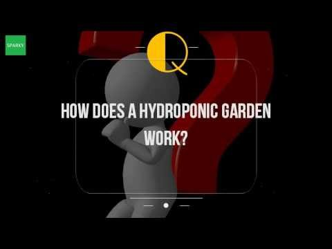 How Does A Hydroponic Garden Work?