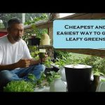 5 things you need to start growing hydroponic plants.