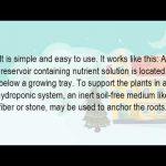 How Do You Grow Hydroponic Plants?