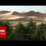 Why is Africa building a Great Green Wall? BBC News