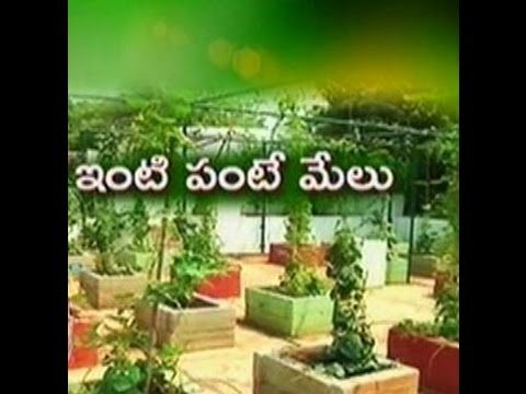 Water conserving by roof gardening in Hyd – జైకిసాన్ – on 17th April 2015