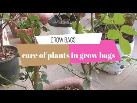 CARE OF PLANTS IN GROW BAGS