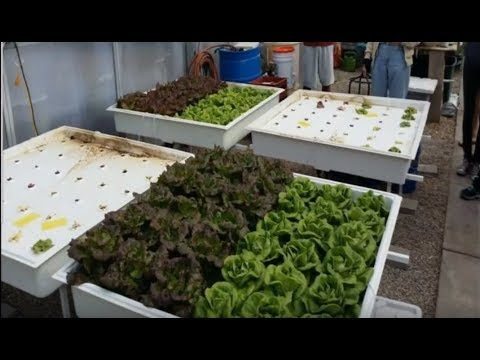 Stacy Tollefson, PhD – My Experience with Organic Hydroponics