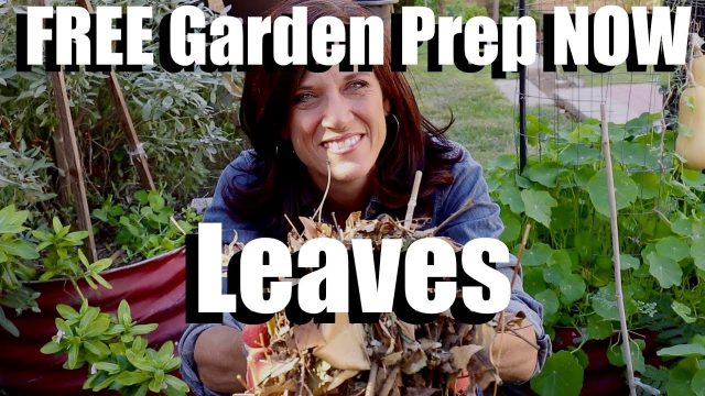 Prep Your Garden Bed for Spring NOW using FREE Leaves // 3 Benefits and the Easy How To