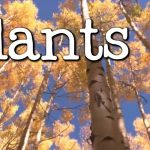 What is a Plant? All About Plants for Kids – FreeSchool