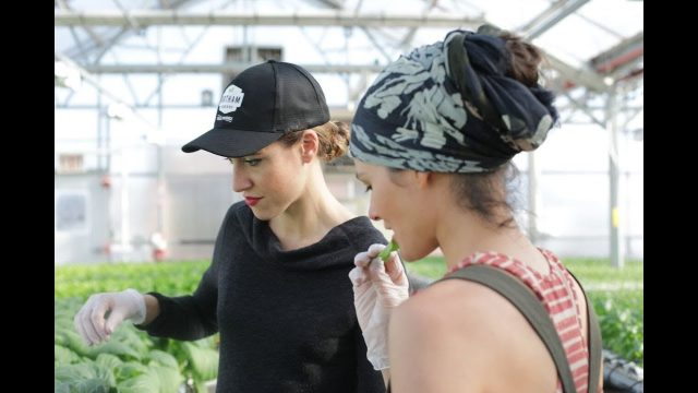 Ep 45: Plant One On Me: Rooftop Hydroponic Greenhouse
