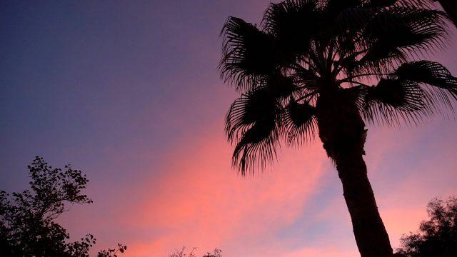 ARIZONA CACTUS – Phoenix Botanical Gardens