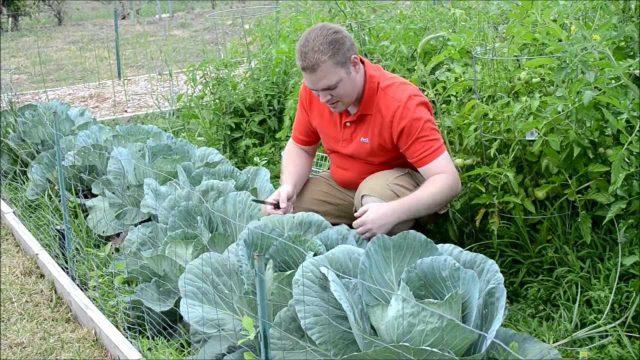 Texas Organic Spring Vegetable Garden 2012 Update #4 of 8