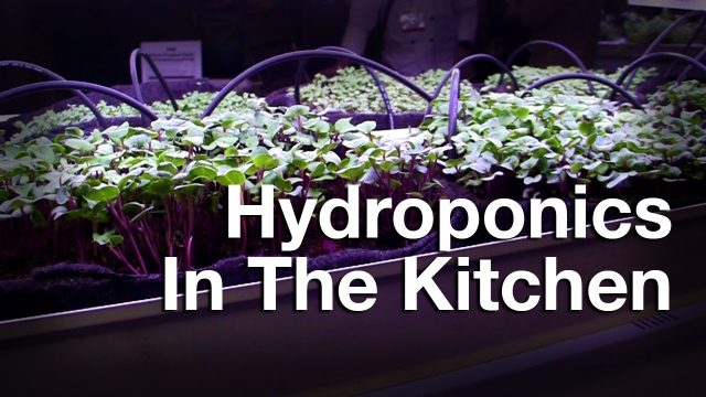 AMB Eco Brings Hydroponic Gardening Into Restaurants