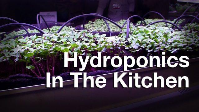 AMB Eco Brings Hydroponic Gardening Into Restaurants