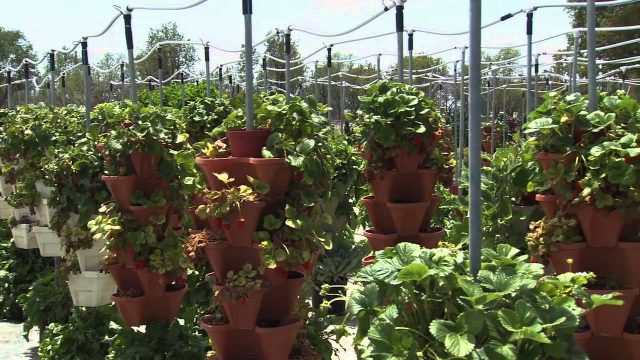 Alegria Fresh – Hydroponic Demonstration Farm, Orange County Great Park