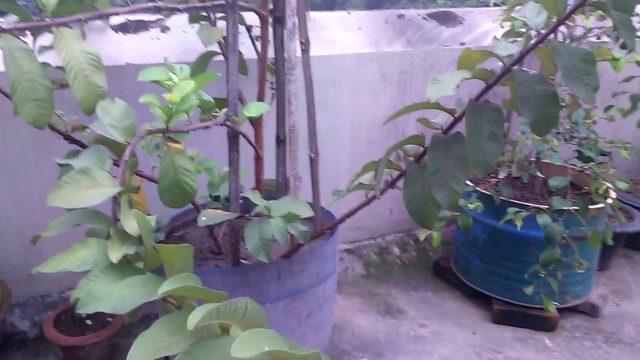Roof Gardening Part 1