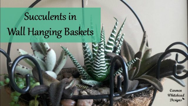 Succulents in wall hanging baskets | Leaf & Clay succulents