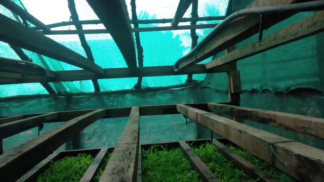 Organic Hydroponics for Cows