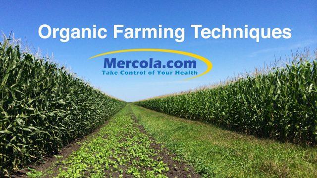 Organic Farming Techniques, Allison Farm