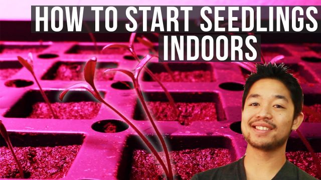3 Ways to Start Seedling Sprouts for Indoor Gardening
