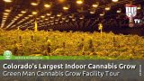 Colorado's Largest Indoor Cannabis Grow! Green Man Grow Facility Tour – Smokers Guide Colorado