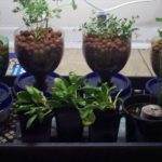Know About NFT System Of Hydroponics- How It Works- Problems And How TO Overcome