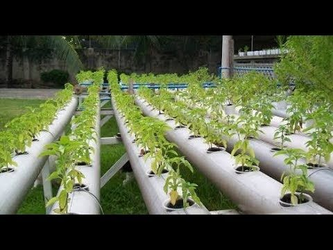 Successful Hydroponics agriculture in Punjab,india