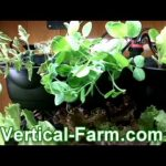 Vertical Farm – Indoor At Home 3ft x 3ft