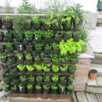 Vertical Garden Ideas Bangalore – A 0$ Vertical Garden with plastic soda bottles